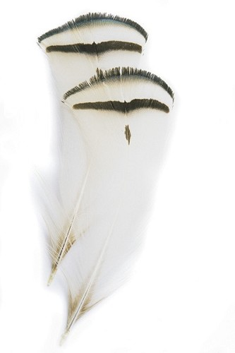Amherst Pheasant Tippet Feathers