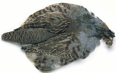 English Partridge Complete Skin